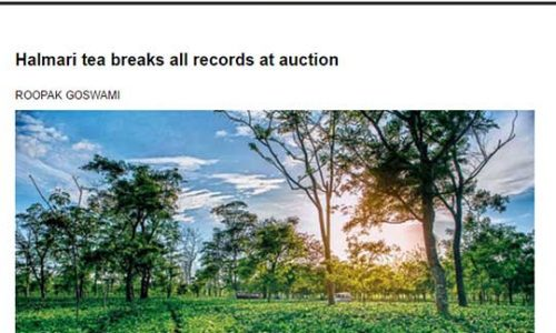Halmari tea breaks all records at auction