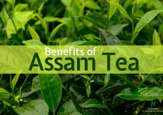 The Assam Tea: Curing All Your Diseases