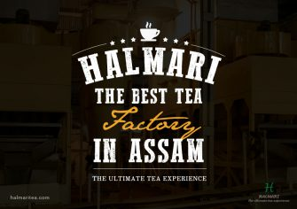 Halmari Tea – The Best Tea Factory in Assam