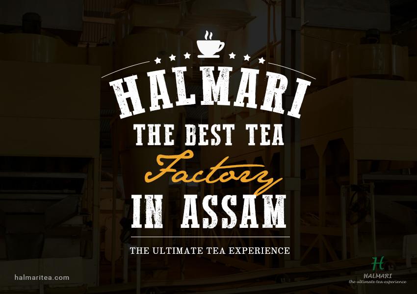 Best Tea Factory in Assam