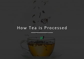 How Tea Is Processed