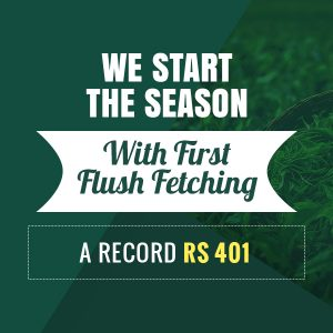 Halmari Tea Sells First Flush at Record Rs 401