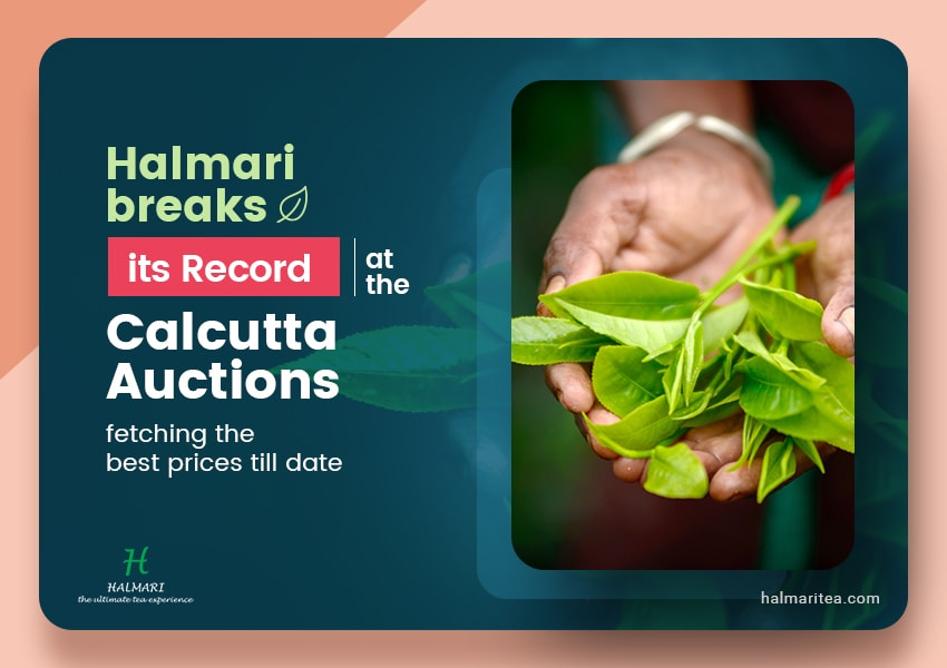 Halmari breaks its record at the Calcutta Auctions