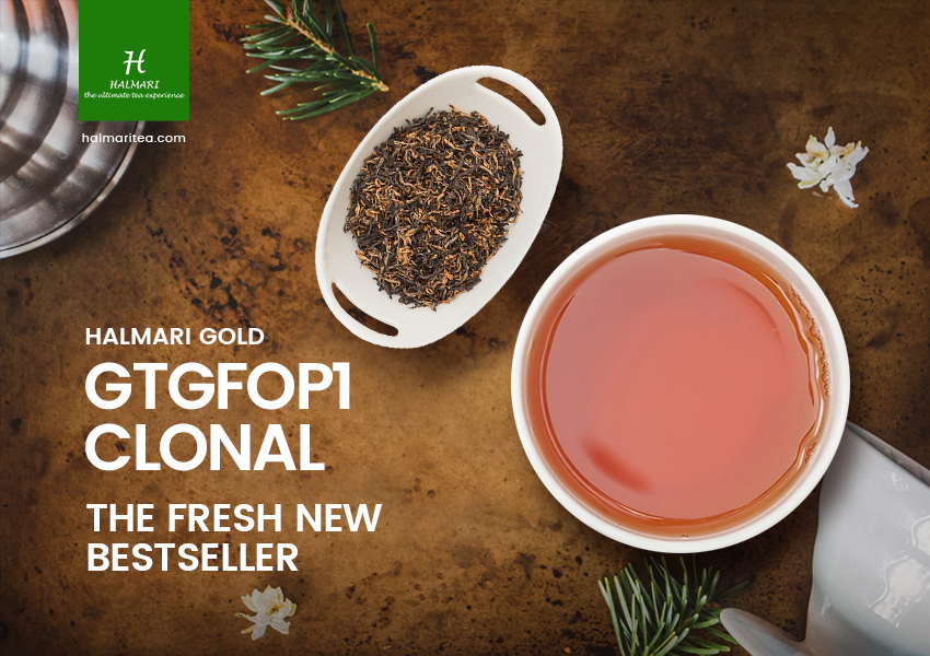 Halmari Gold GTGFOP1 Clonal the Fresh New Bestseller