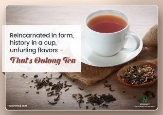 Why Oolong Tea Has a Vintage Touch to Its Legacy?