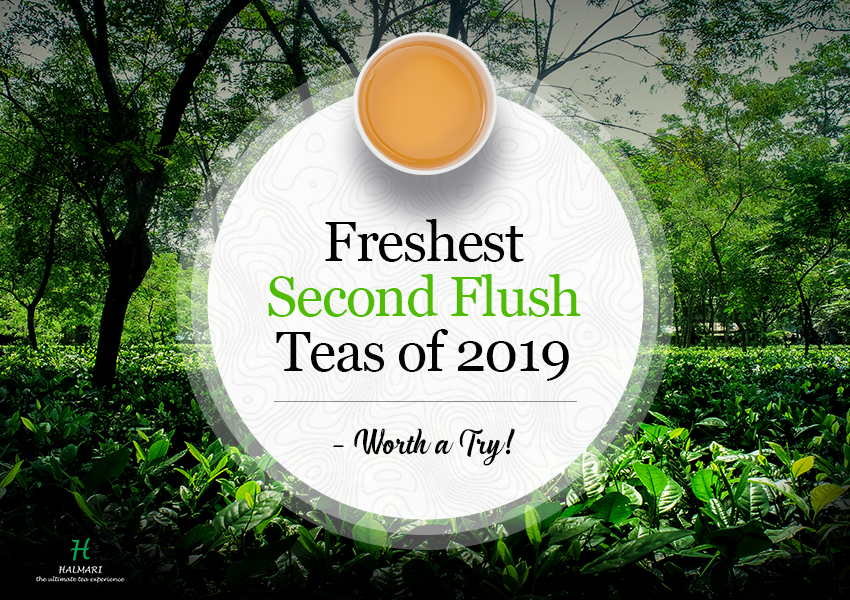 Second Flush Teas of 2019