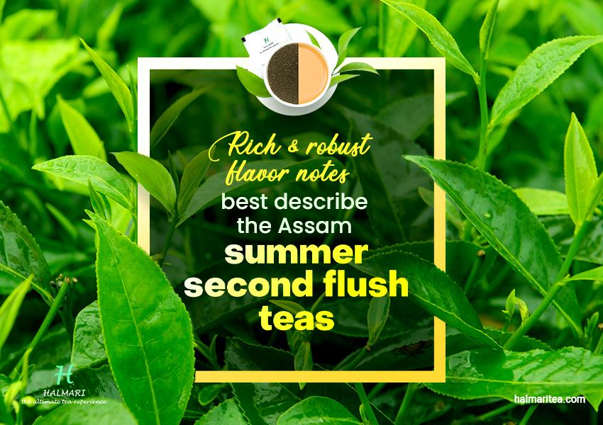 Why Freshly Picked Assam Summer Second Flush Tea Are Better?